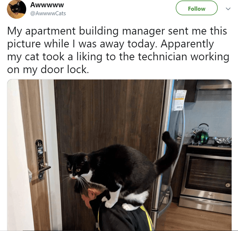 cute cat story of a cat sitting on a technicians back