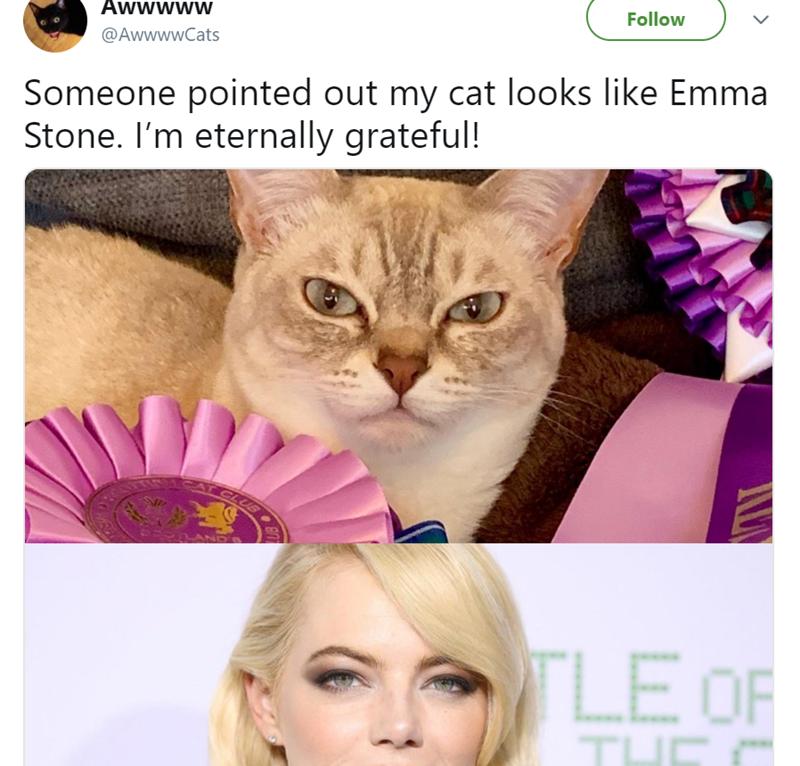 cute cat story of a cat that looks like Emma Stone