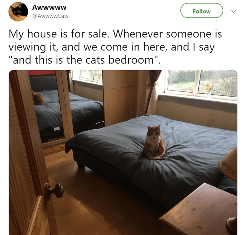 cute cat story of a cat that sits in a bedroom when people come to check an open house