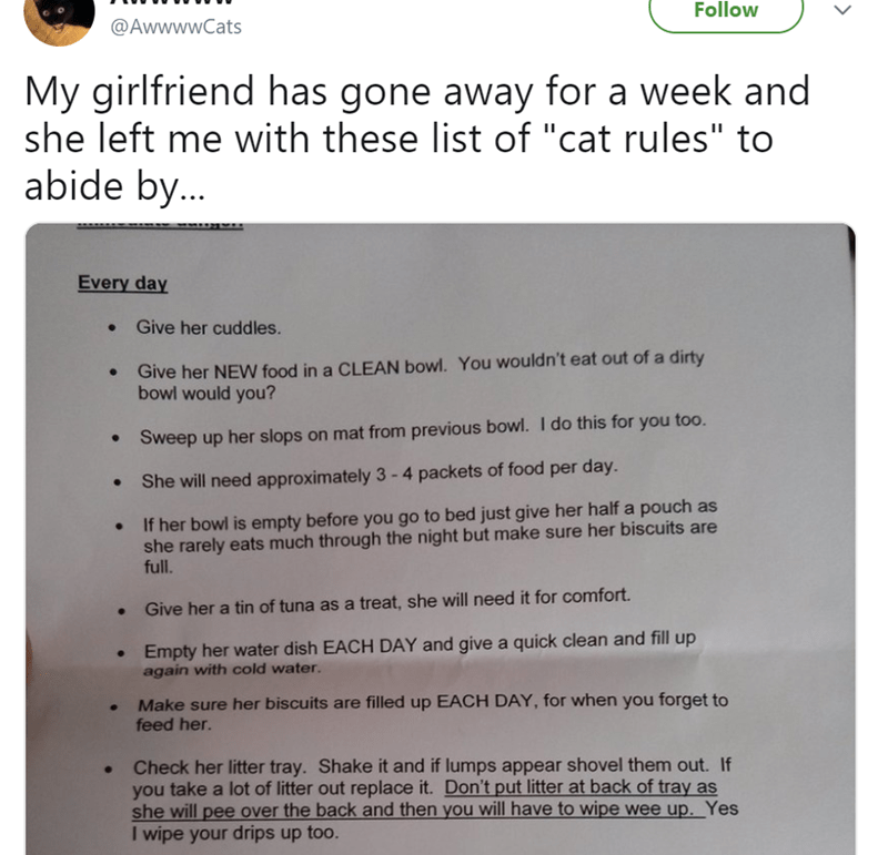 catruday cat story of a list of cat rules that a girlfriend left for her boyfriend
