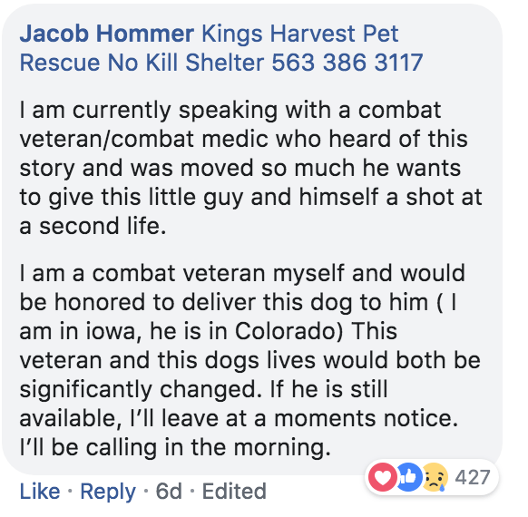 Text - Jacob Hommer Kings Harvest Pet Rescue No Kill Shelter 563 386 3117 I am currently speaking with a combat veteran/combat medic who heard of this story and was moved so much he wants to give this little guy and himself a shot at a second life. I am a combat veteran myself and would be honored to deliver this dog to him ( am in iowa, he is in Colorado) This veteran and this dogs lives would both be significantly changed. If he is still available, I'll leave at a moments notice. I'll be calli