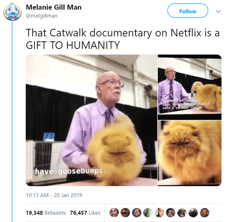 Photo caption - Melanie Gill Man Follow @melgillman That Catwalk documentary on Netflix is a GIFT TO HUMANITY 32 years of judgang, this is one of the finest cats I've ever judged. have goosebumps 10:13 AM 20 Jan 2019 19,348 Retweets 76,457 Likes