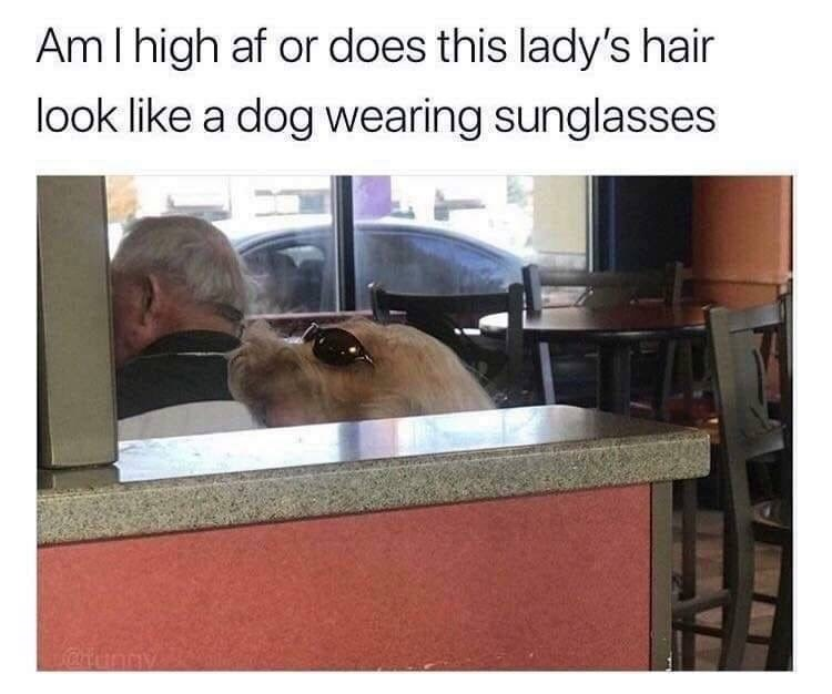 Canidae - AmI high af or does this lady's hair look like a dog wearing sunglasses