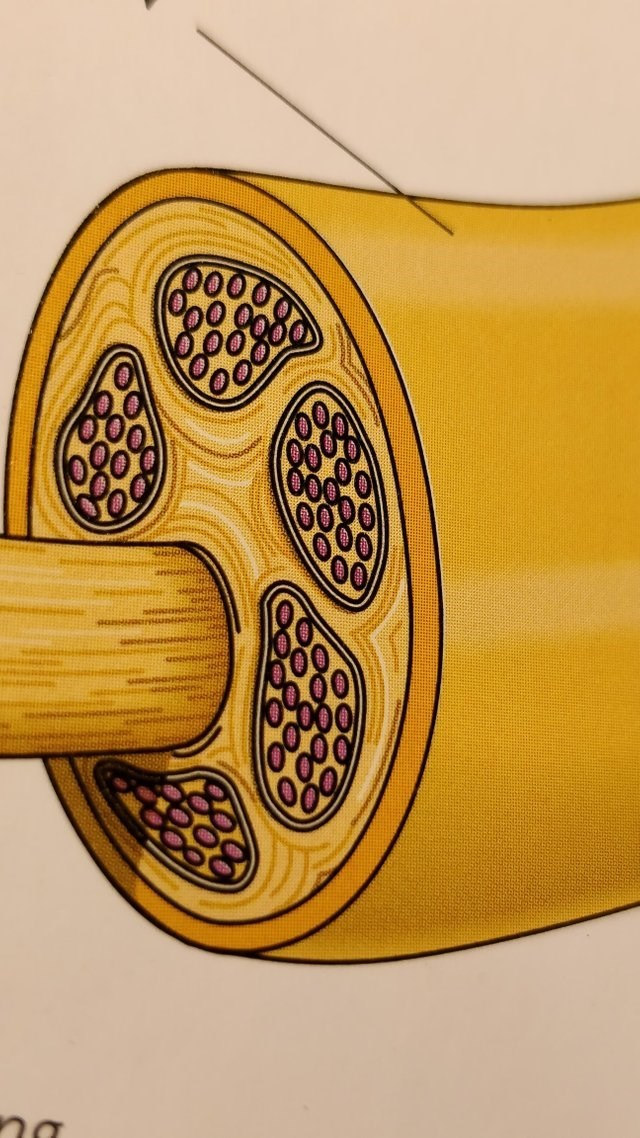 Yellow - na