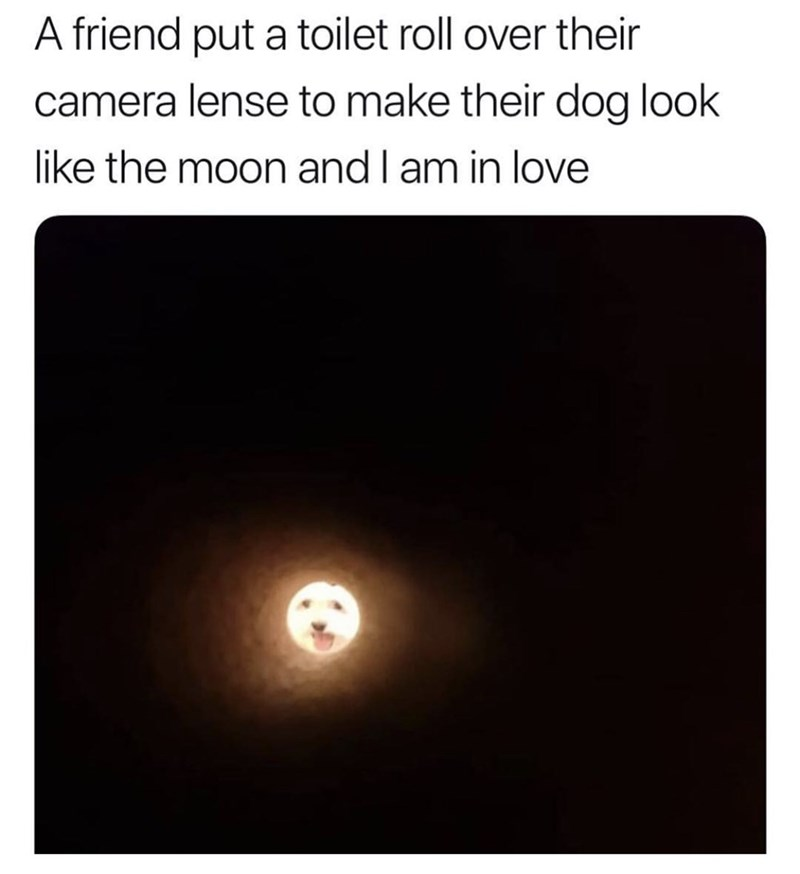 "Caption that reads, ""A friend put a toilet paper roll over their camera lens to make their dog look like the moon and I am in love"" above a pic of the same"