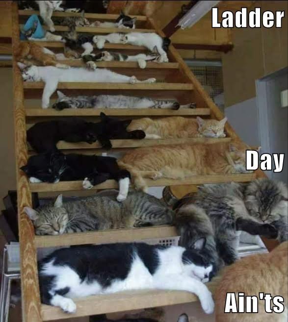 Ladder Day Ain\'ts