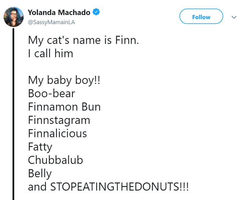 Text - Yolanda Machado Follow @SassyMamainLA My cat's name is Finn. I call him My baby boy!! Воo-bear Finnamon Bun Finnstagram Finnalicious Fatty Chubbalub Belly and STOPEATINGTHEDONUTS!!!