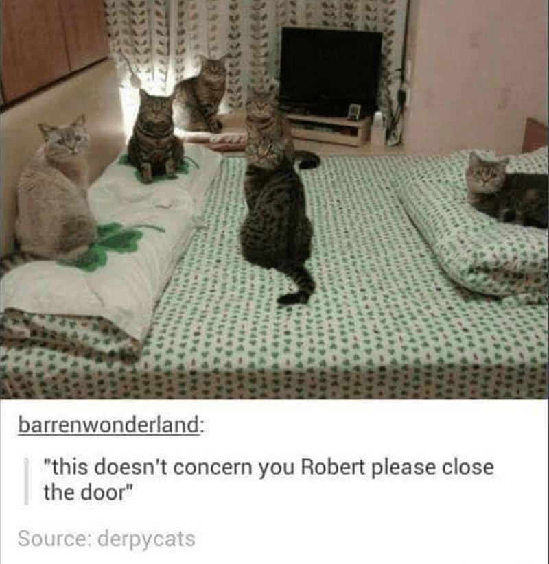 """Cat - barrenwonderland: """"this doesn't concern you Robert please close the door"""" Source: derpycats"""