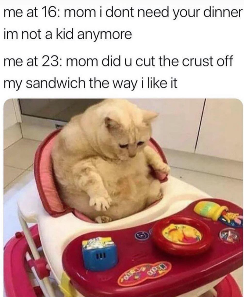 Cat - me at 16: momidont need your dinner im not a kid anymore me at 23: mom did u cut the crust off my sandwich the way i like it Open