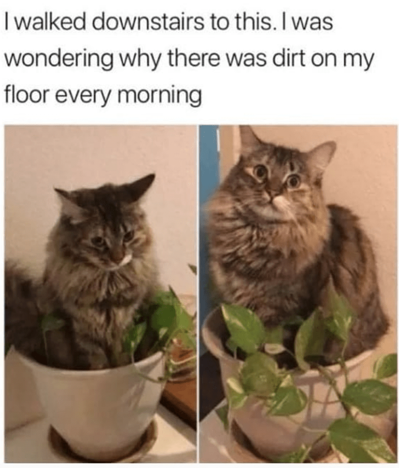 Cat - I walked downstairs to this. I was wondering why there was dirt on my floor every morning