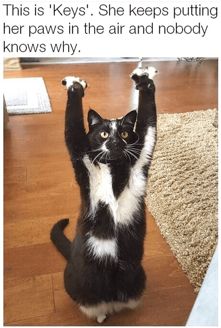 Cat - This is 'Keys'. She keeps putting her paws in the air and nobody knows why.