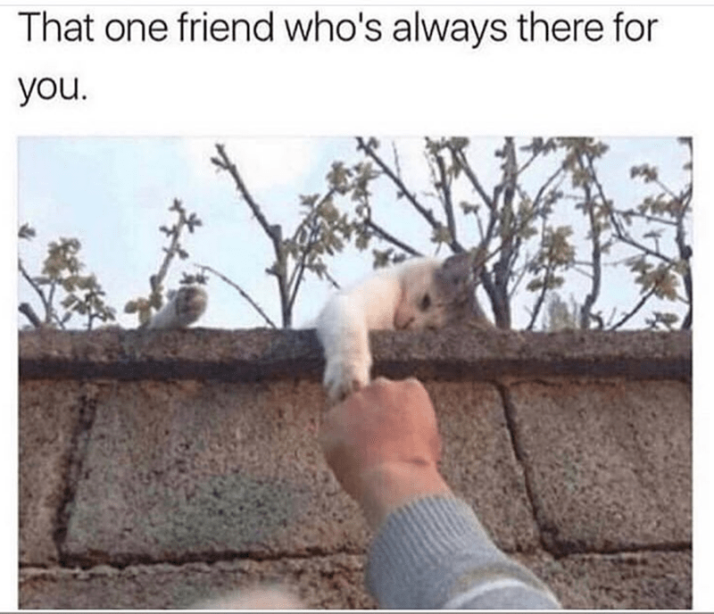 Text - That one friend who's always there for you.