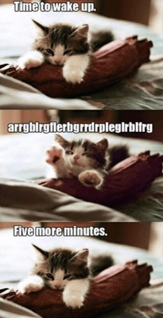 Cat - Time to wake up. arrgbirgflerbgrrdrplegirblfrg Five more minutes.