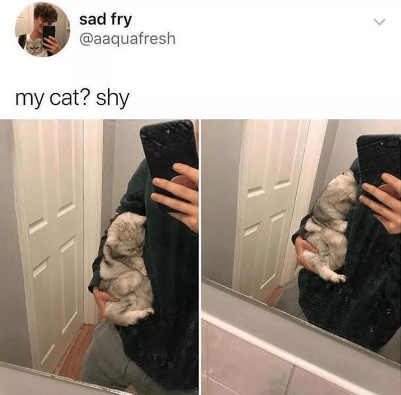 Fur - sad fry @aaquafresh my cat? shy
