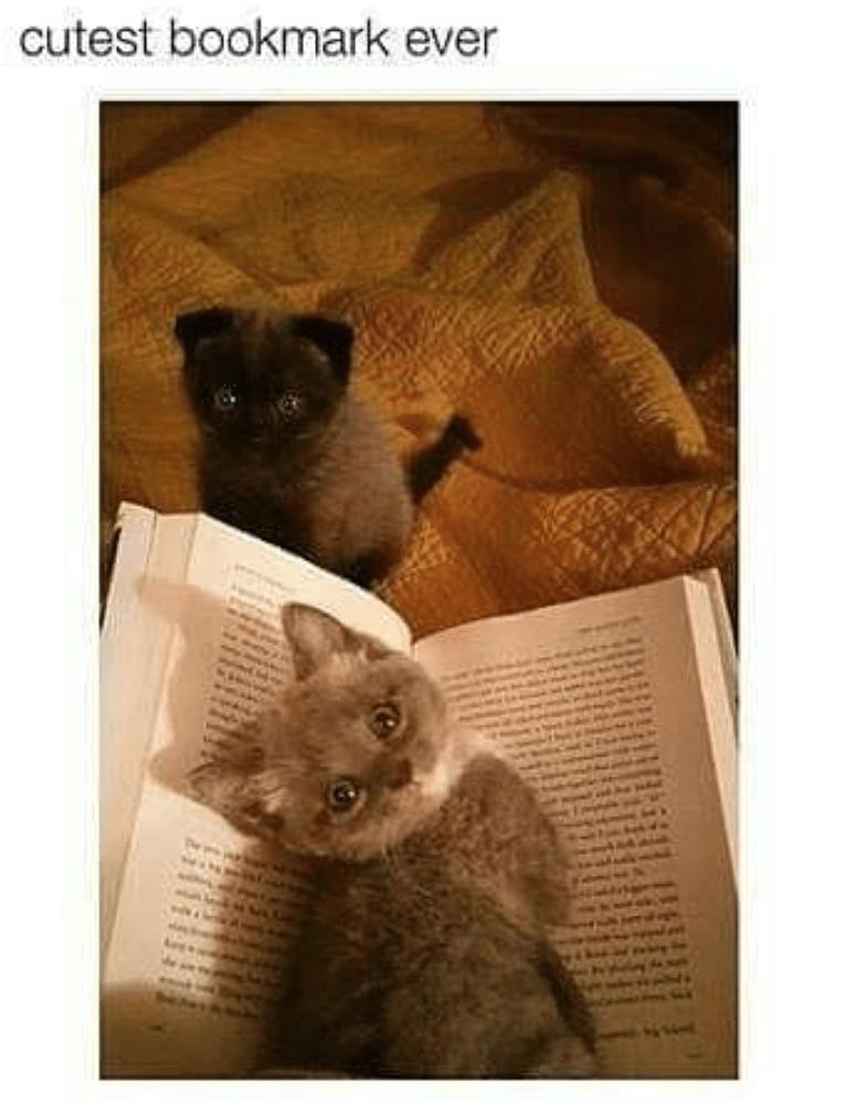 Cat - cutest bookmark ever