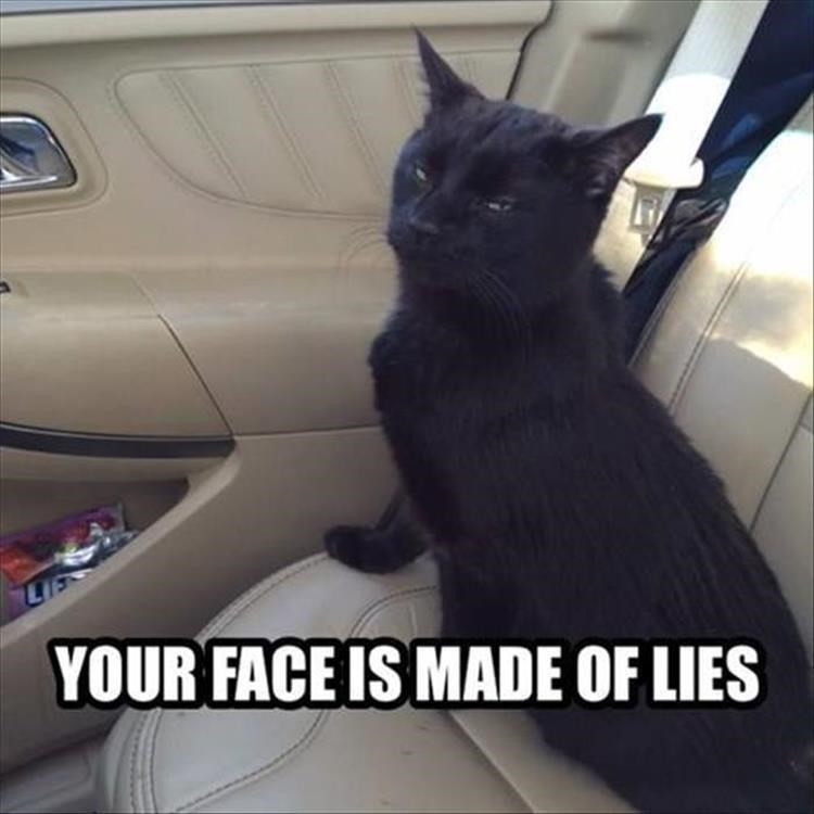 Cat - YOUR FACE IS MADE OF LIES