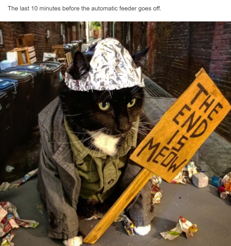 black cat dressed up as homeless person holding sign saying the end is meow and wearing tin foil hat on head cat cosplay