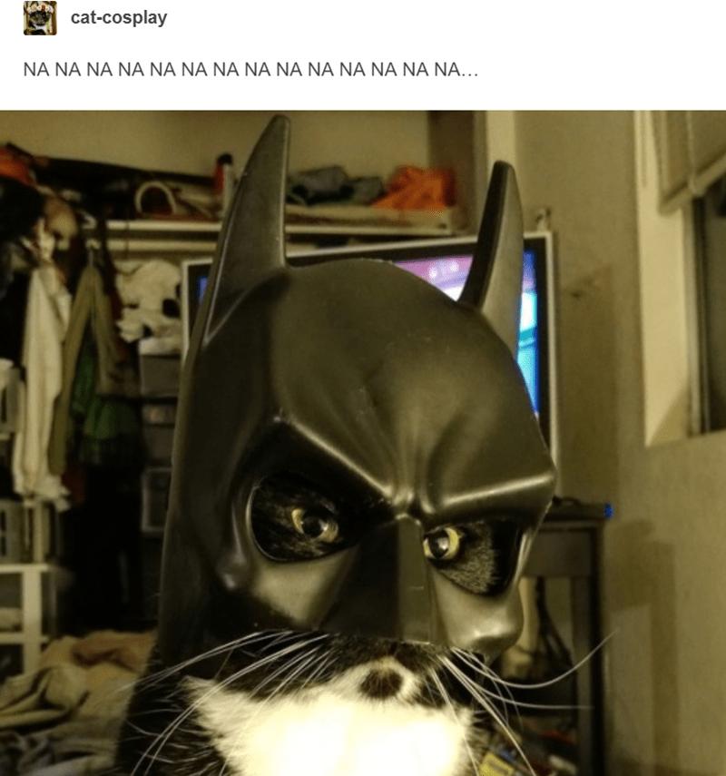 cat wearing batman mask cat cosplay
