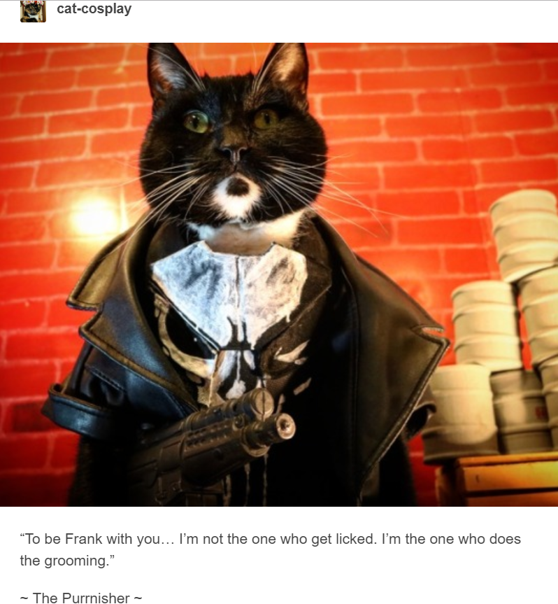 black cat dressed up as the punished holding gun cat cosplay