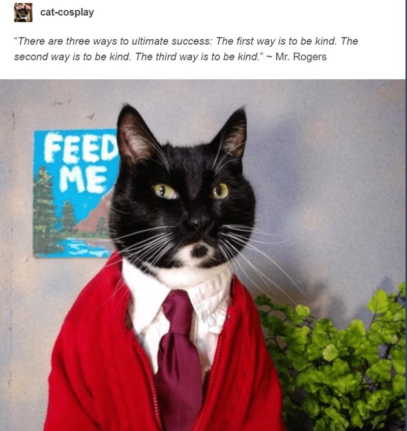 black cat dressed up as mr rogers in white shirt tie and red cardigan cat cosplay