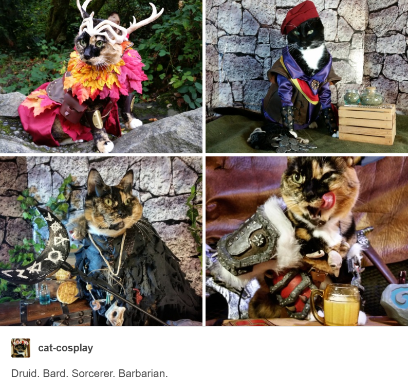 4 panels showing cat dressed up as druid, bard, sorcerer and barbarian cat cosplay