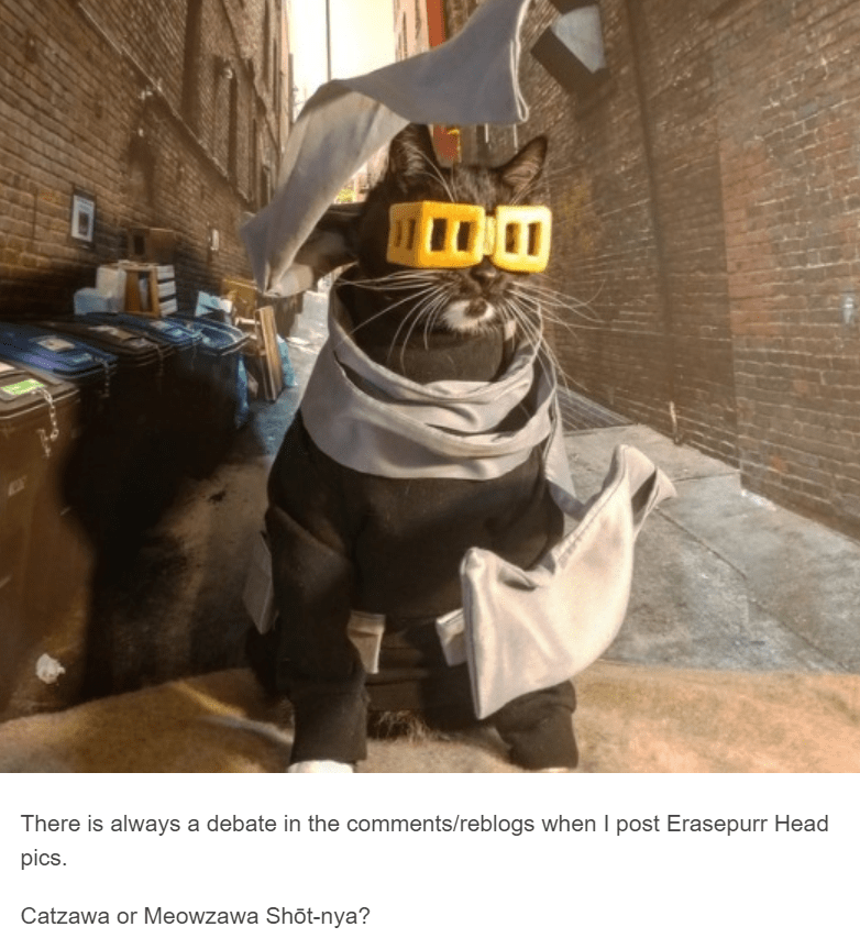 cat dressed up as anime character cat cosplay