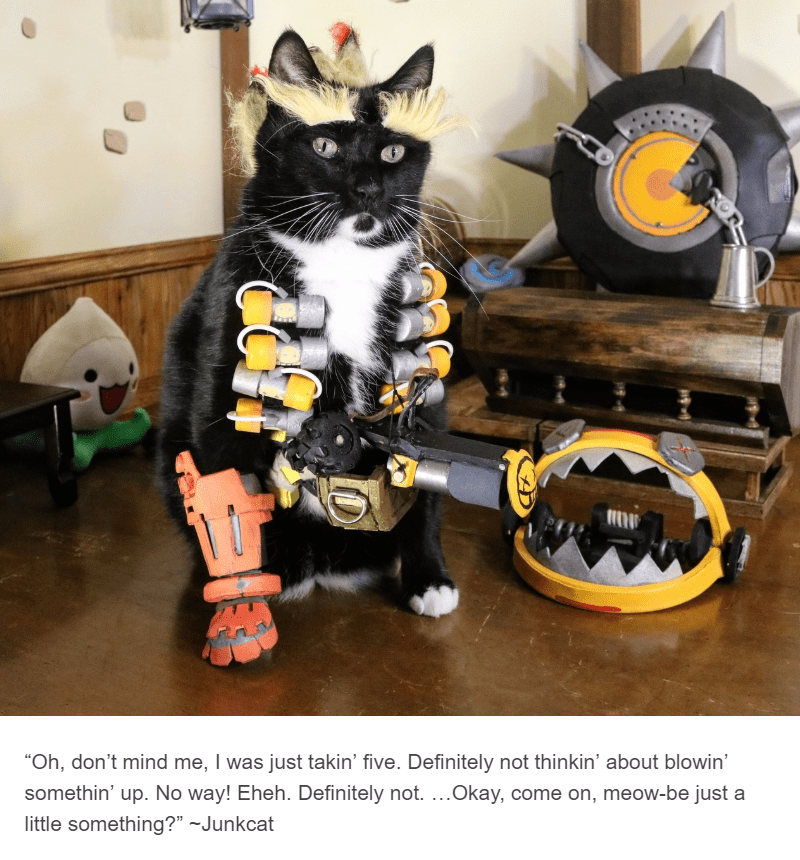 black cat dressed up as the junkman cat cosplay
