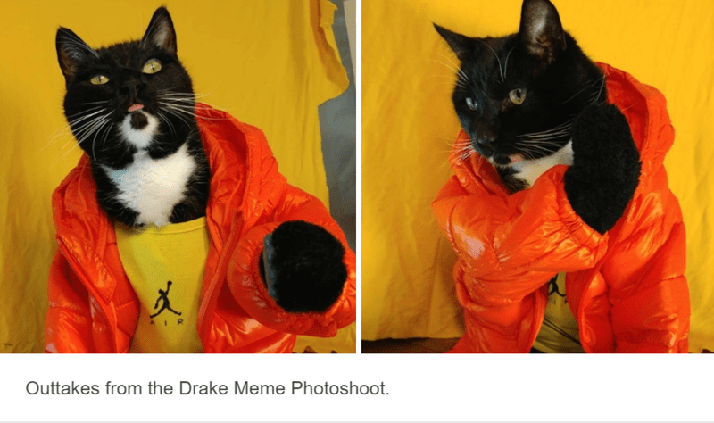 cat dressed up as drake in orange jumper with yellow background cat cosplay