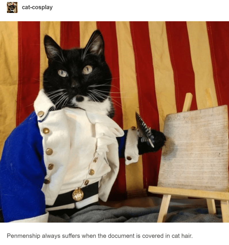 black cat dressed up as old fashioned 17th century scribe cat cosplay