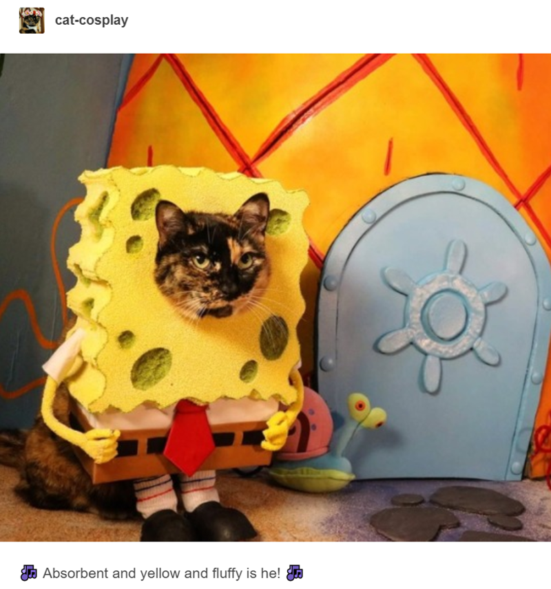 tabby cat dressed up as spongebob squarepants in front of pineapple house cat cosplay