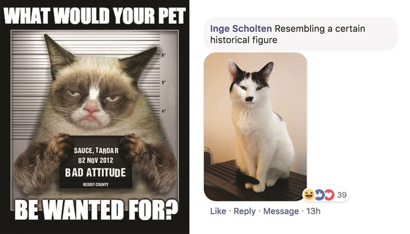 Cat - WHAT WOULD YOUR PET Inge Scholten Resembling a certain historical figure SAUCE, TARDAR 02 NOV 2012 BAD ATTITUDE REDDIT COUNTY 39 BE WANTED FOR? Like Reply Message 13h