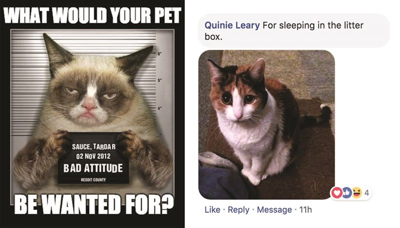 Cat - WHAT WOULD YOUR PET Quinie Leary For sleeping in the litter box. SAUCE, TARDAR 02 NOV 2012 BAD ATTITUDE REDDIT COUNTY 4 BE WANTED FOR? Like Reply Message 11h