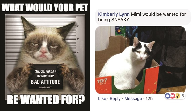 Cat - WHAT WOULD YOUR PET Kimberly Lynn Mimi would be wanted for being SNEAKY SAUCE, TARDAR 02 NOV 2012 BAD ATTITUDE 197 LOADS REDDIT COUNTY BE WANTED FOR? Like Reply Message 12h