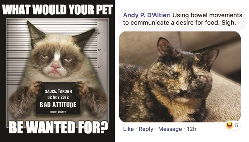 Cat - WHAT WOULD YOUR PET Andy P. D'Altieri Using bowel movements to communicate a desire for food. Sigh. SAUCE, TARDAR 02 NOV 2012 BAD ATTITUDE REDDIT COUNTY BE WANTED FOR? Like Reply Message 12h