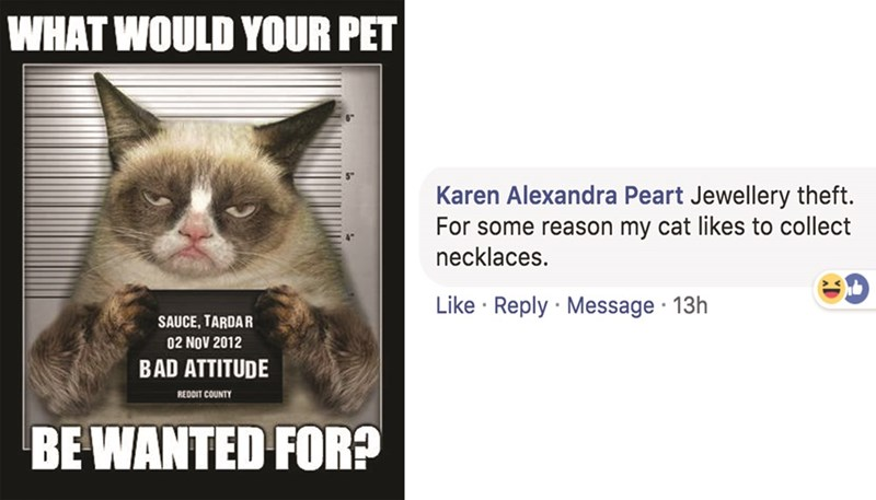 Cat - WHAT WOULD YOUR PET Karen Alexandra Peart Jewellery theft. For some reason my cat likes to collect necklaces. Like Reply Message 13h SAUCE, TARDAR 02 NOV 2012 BAD ATTITUDE REDDIT COUNTY BE WANTED FOR?