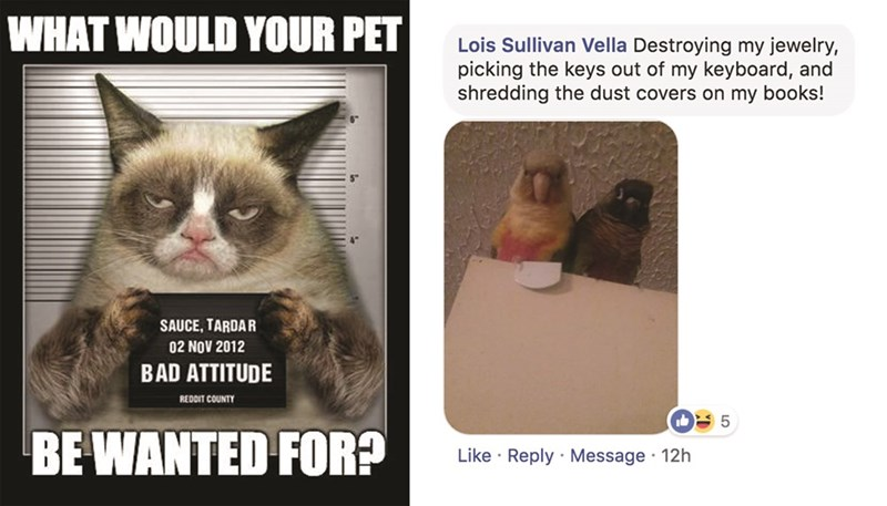 Cat - WHAT WOULD YOUR PET Lois Sullivan Vella Destroying my jewelry, picking the keys out of my keyboard, and shredding the dust covers on my books! SAUCE, TARDAR 02 NOV 2012 BAD ATTITUDE REDDIT COUNTY 5 BE WANTED FOR? Like Reply Message 12h