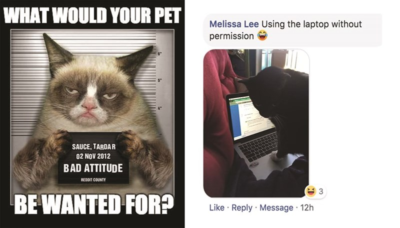 Cat - WHAT WOULD YOUR PET Melissa Lee Using the laptop without permission SAUCE, TARDAR 02 NOV 2012 BAD ATTITUDE REDDIT COUNTY 3 BE WANTED FOR? Like Reply Message 12h