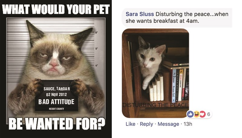Cat - WHAT WOULD YOUR PET Sara Sluss Disturbing the peace...when she wants breakfast at 4am. COLLINS U SAUCE, TARDAR 02 NOV 2012 BAD ATTITUDE DISTURBING THE PEACE REDDIT COUNTY 6 BE WANTED FOR? Like Reply Message 13h