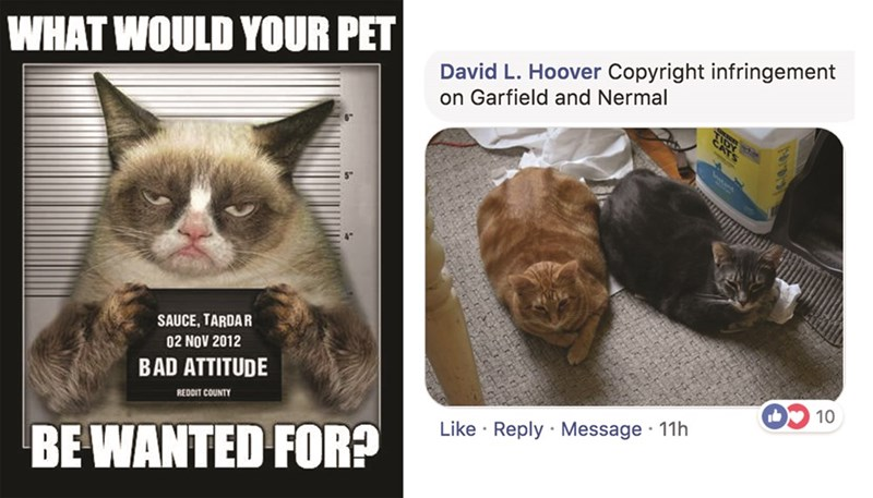 Cat - WHAT WOULD YOUR PET David L. Hoover Copyright infringement on Garfield and Nermal SAUCE, TARDAR 02 NOV 2012 BAD ATTITUDE REDDIT COUNTY 10 BE WANTED FOR? Like Reply Message 11h