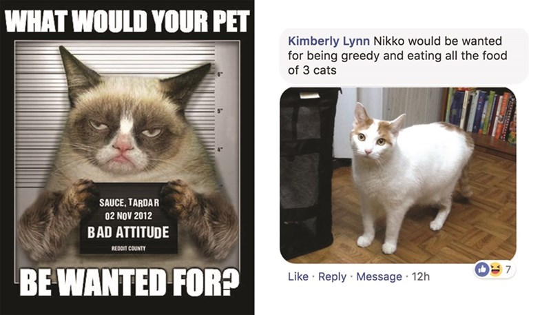 Cat - WHAT WOULD YOUR PET Kimberly Lynn Nikko would be wanted for being greedy and eating all the food of 3 cats SAUCE, TARDAR 02 NOV 2012 BAD ATTITUDE REDDIT COUNTY 7 BE WANTED FOR? Like Reply Message 12h
