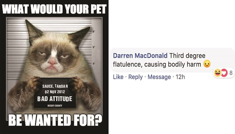 Cat - WHAT WOULD YOUR PET Darren MacDonald Third degree flatulence, causing bodily harm Like Reply Message 12h SAUCE, TARDAR 02 NOV 2012 BAD ATTITUDE REDDIT COUNTY BE WANTED FOR?
