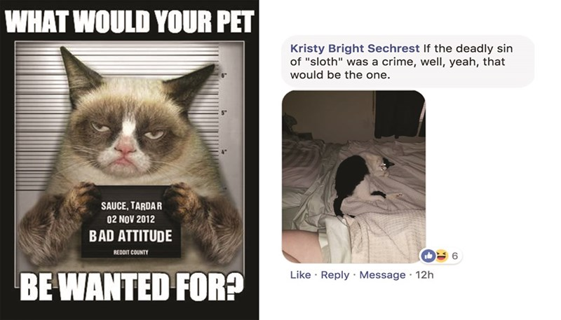 """Cat - WHAT WOULD YOUR PET Kristy Bright Sechrest If the deadly sin of """"sloth"""" was a crime, well, yeah, that would be the one. SAUCE, TARDAR 02 NOV 2012 BAD ATTITUDE REDDIT COUNTY 6 BE WANTED FOR? Like Reply Message 12h"""