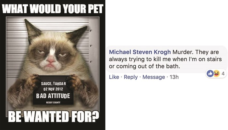Cat - WHAT WOULD YOUR PET Michael Steven Krogh Murder. They are always trying to kill me when I'm on stairs or coming out of the bath. 4 Like Reply Message 13h SAUCE, TARDAR 02 NOV 2012 BAD ATTITUDE REDDIT COUNTY BE WANTED FOR?