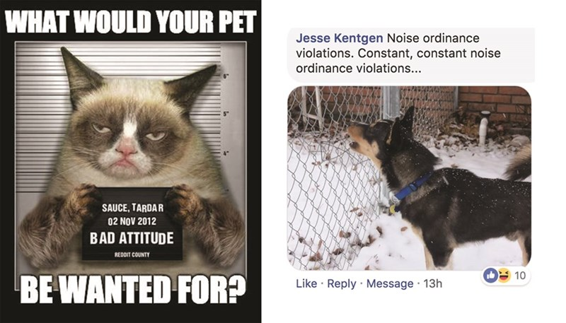 Cat - WHAT WOULD YOUR PET Jesse Kentgen Noise ordinance violations. Constant, constant noise ordinance violations... SAUCE, TARDAR 02 NOV 2012 BAD ATTITUDE REDDIT COUNTY 10 BE WANTED FOR? Like Reply Message 13h