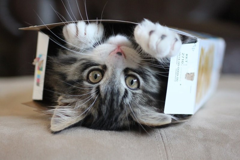 study about cats and boxes - Cat - RKT 2710 0514-00-0009-00