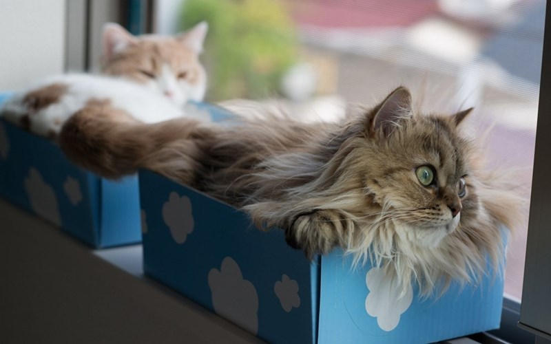 study about cats and boxes - Cat