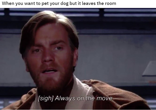 Chin - When you want to pet your dog but it leaves the room [sigh] Always on the move