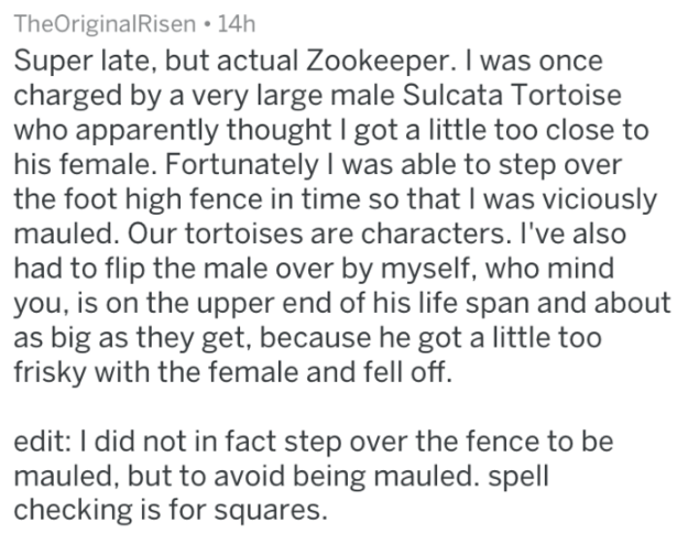 Text - TheOriginalRisen 14h Super late, but actual Zookeeper. I was once charged by a very large male Sulcata Tortoise who apparently thought I got a little too close to his female. Fortunately I was able to step over the foot high fence in time so that I was viciously mauled. Our tortoises are characters. I've also had to flip the male over by myself, who mind you, is on the upper end of his life span and about as big as they get, because he got a little too frisky with the female and fell off.