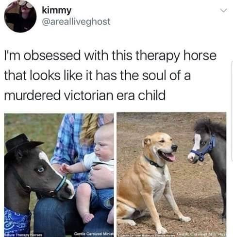 Funny meme about therapy horse.