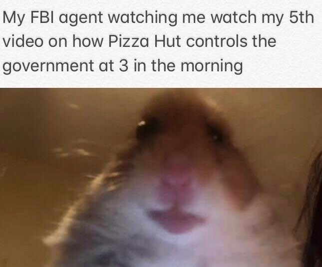 """Caption that reads, """"My FBI agent watching me watch my fifth video on how Pizza Hut controls the government at 3 in the morning"""" above a pic of a hamster looking right at the camera"""